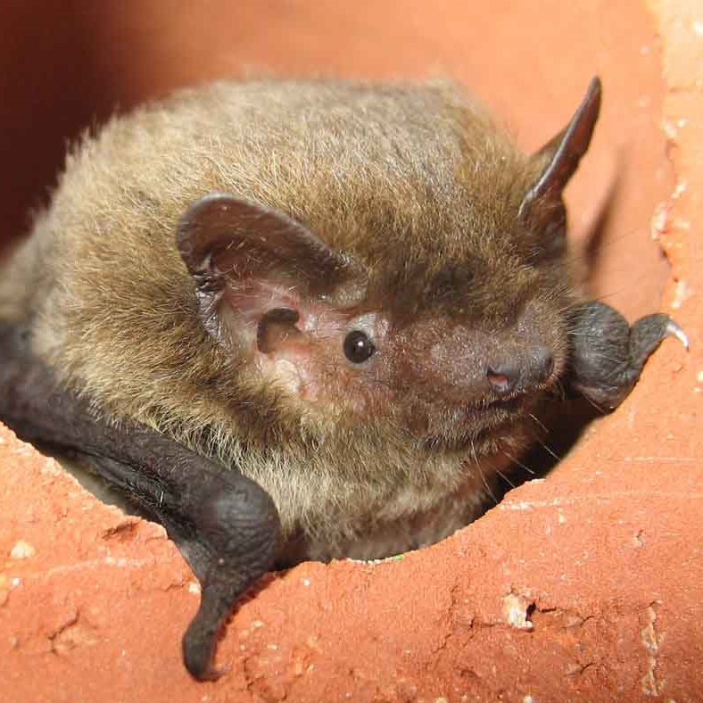 Bemerton Folly Bat