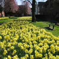 Arts Centre daffs