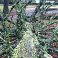 Blog Treedown VP