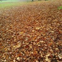 Victoriapark Autumn leaves